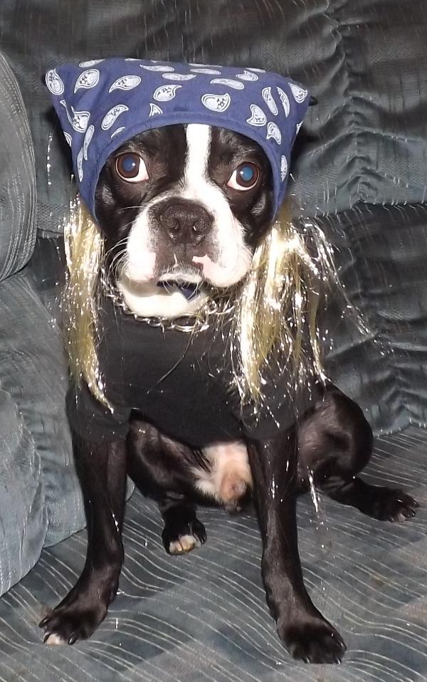 Blue Bandana with Hair Dog Costume