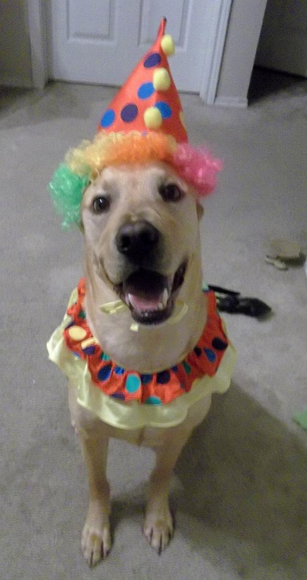 Clown Collar And Hat Dog Halloween Costume With Same Day