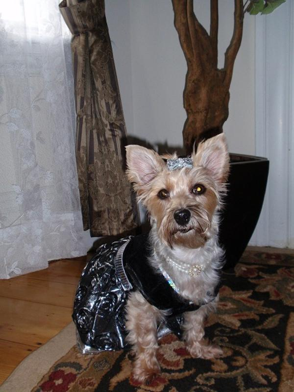 East Side Collection Glam Dog Dress With Same Day Shipping