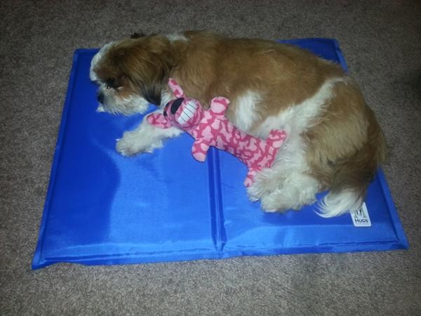 Chillz Cooling Pad Gel Pet Mat With Same Day Shipping