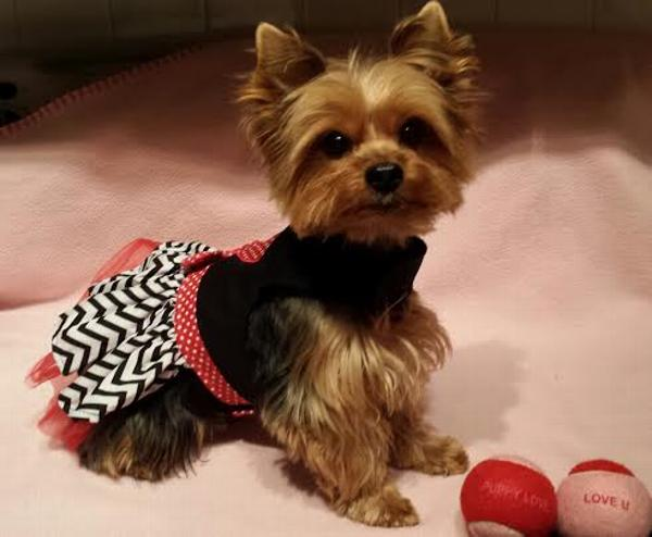 Love Me Chevron Dog Dress by East Side Collection