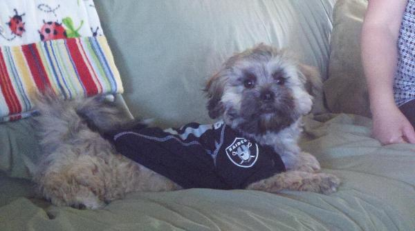 low priced b3ec3 3e9c2 oakland raiders pet jersey