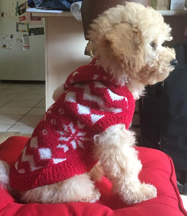 Red Snowflake Dog Hoodie By Hip Doggie With Same Day