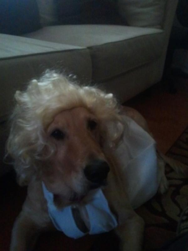 Silver Screen Starlet Dog Costume Baxterboo