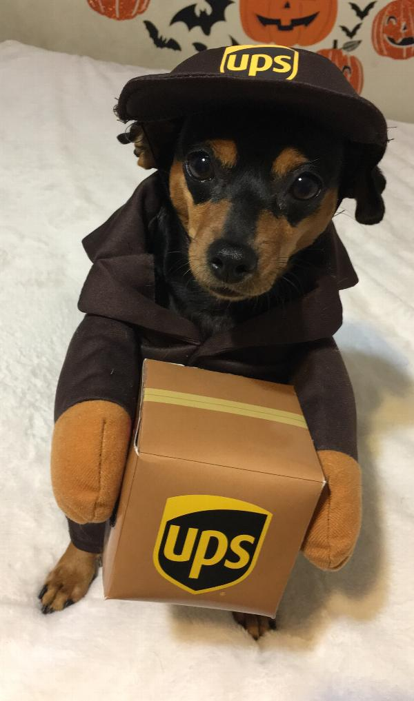 ups pal dog costume with same day shipping baxterboo