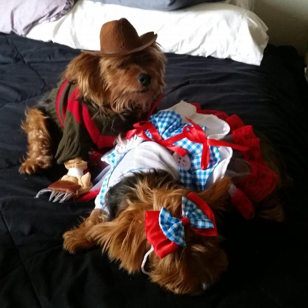 Wizard Of Oz Dorothy Dog Halloween Costume With Same Day