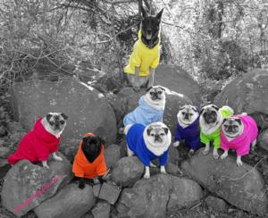 Pug Party Plus One - Hazel Grace in orange