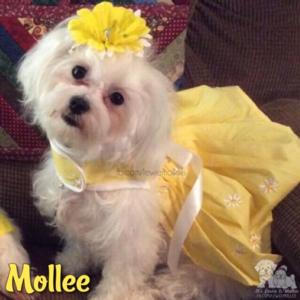 Mollee