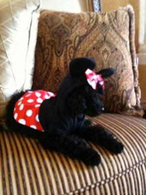 Girl Mouse Dog Costume Baxterboo