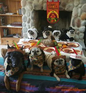 Pug Party Plus One