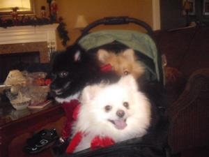 Bob The Pom, Mia Bella and Bubcus