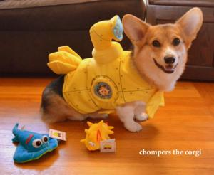 Chompers the Corgi