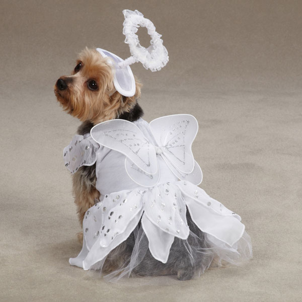 Angel Paws Halloween Dog Costume