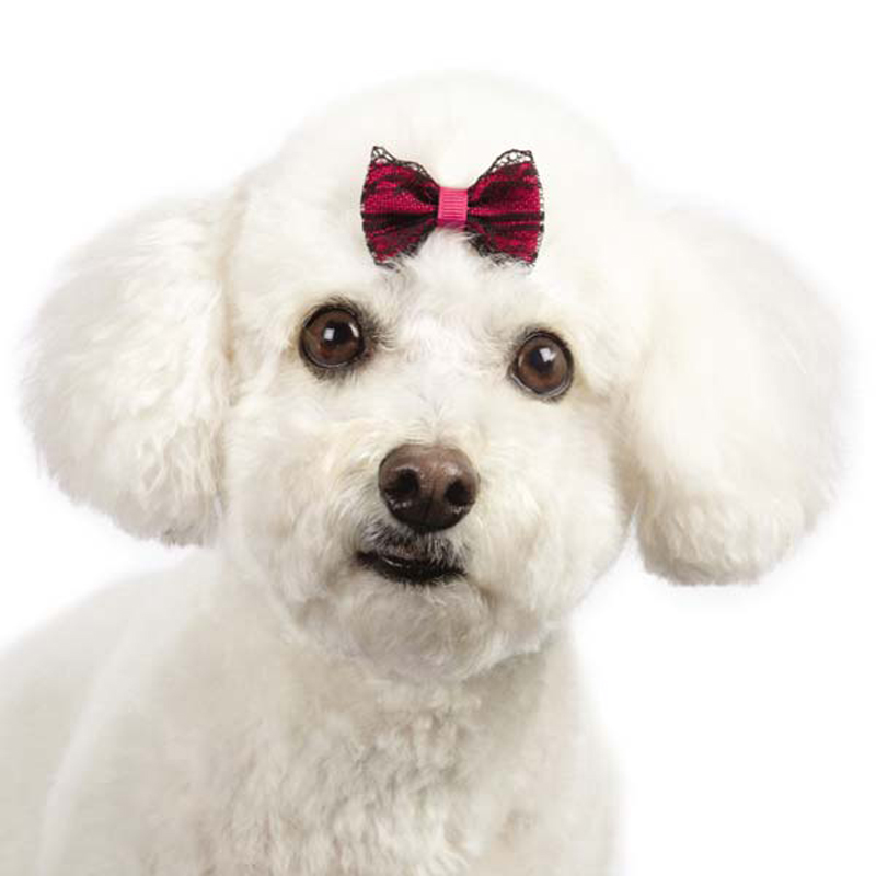Aria Heritage Lace Dog Bows