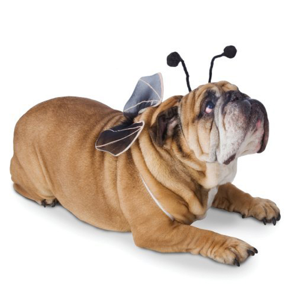 Bat Pet Wings Dog Costume - Black