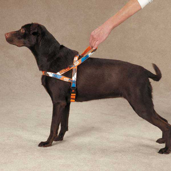Casual Canine Xtrm Game Over Harness - Orange