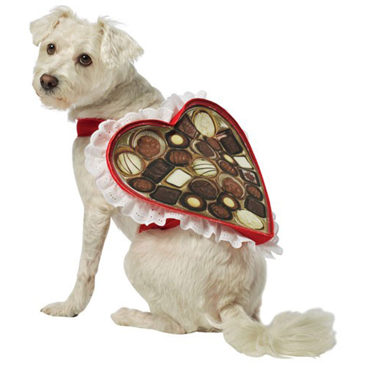 Chocolate Box Dog Costume by Rasta Imposta with Same Day Shipping ...