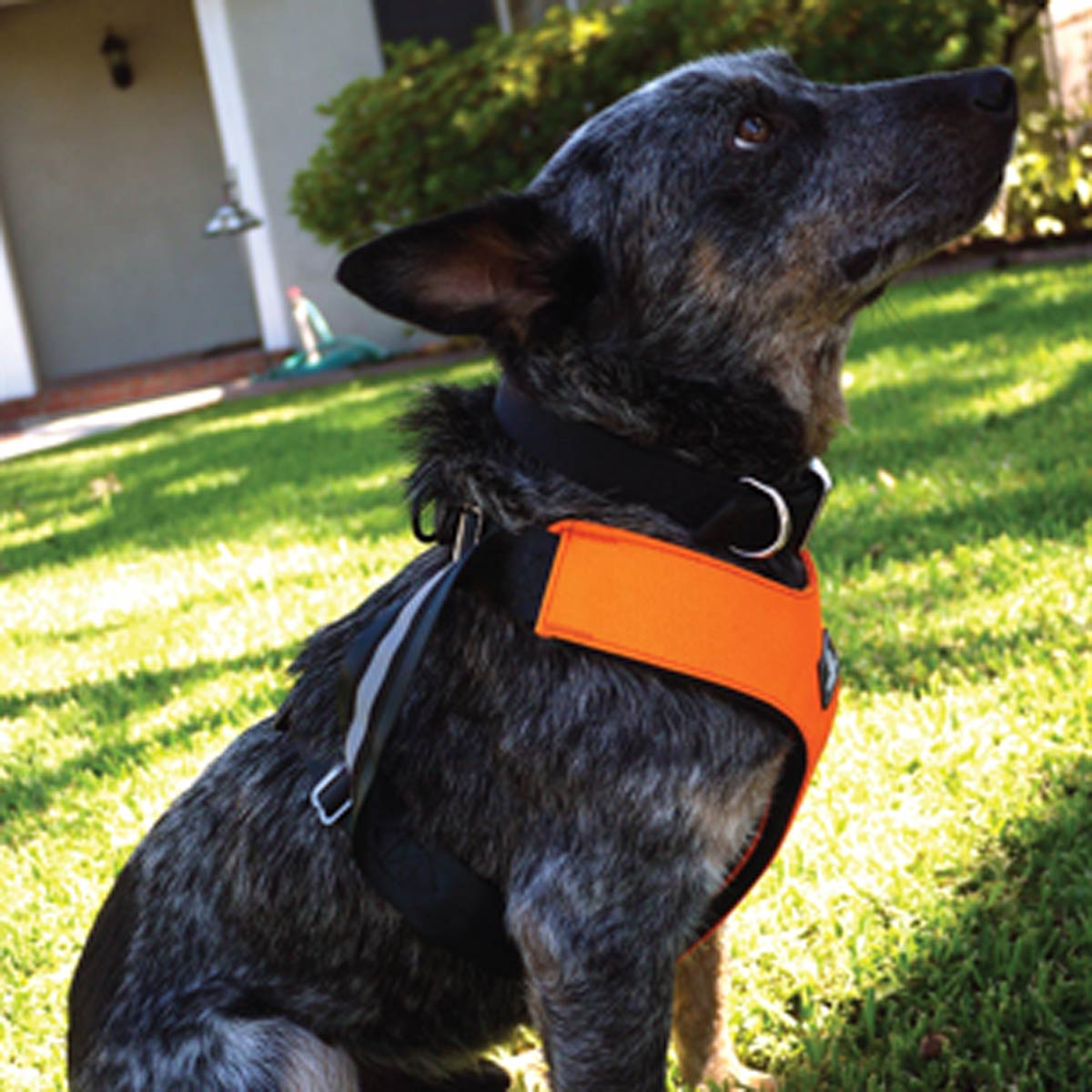 Dog Car Harness Australia