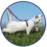 Come with Me Kitty Harness & Bungee Leash - Black/Silver
