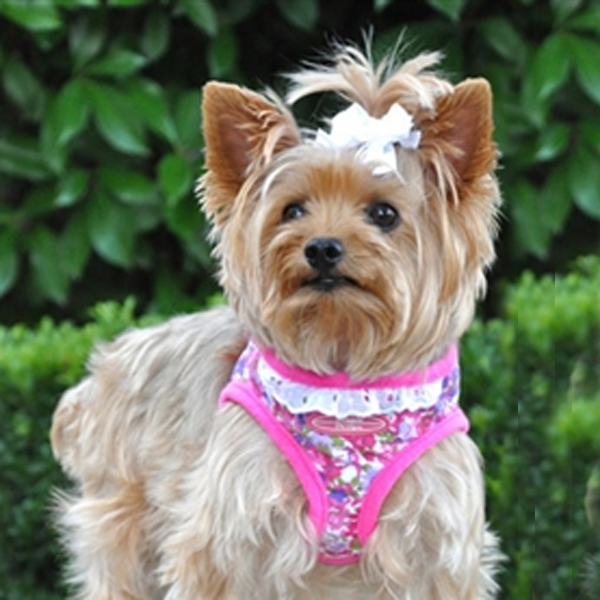 Designer Choke-Free Step-In Dog Harness - Fandango Floral and Lace