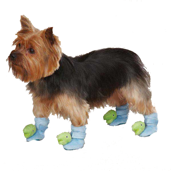Dino Dog Slippers - Blue