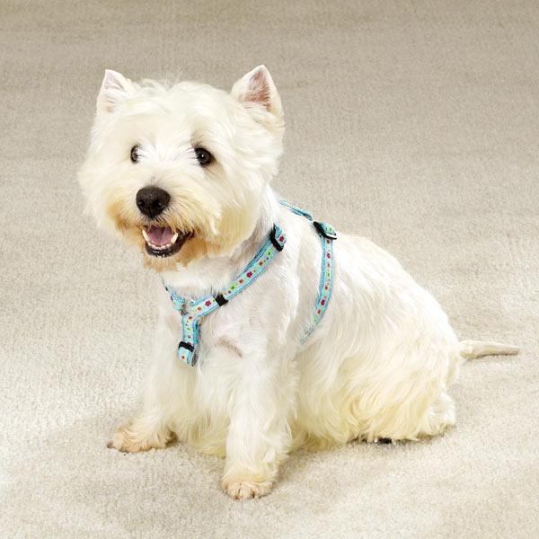 East Side Collection Fashion Dog Harness - Blue Blossoms