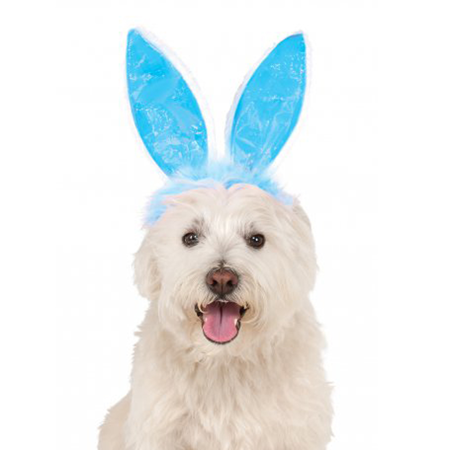 Easter Bunny Ears Dog Costume Headpiece - Blue with Same Day ...