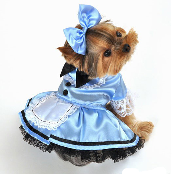 Fantasy Alice in Wonderland Halloween Dog Costume