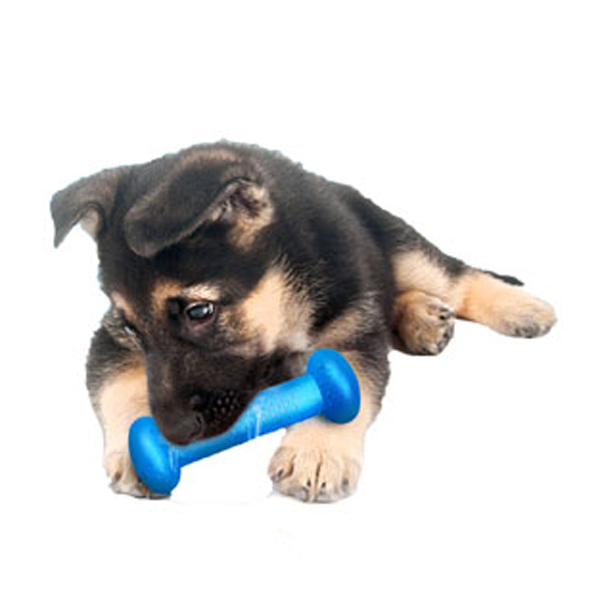 Hydro Fetch Dog Toy