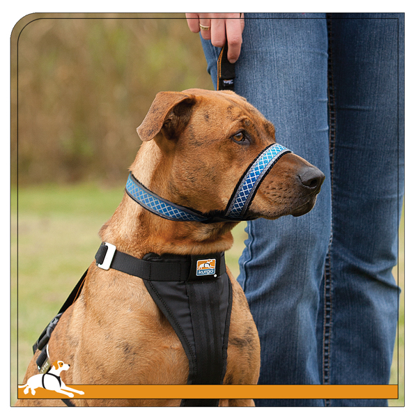 Kurgo Dog Snout About Strap - Costal Blue