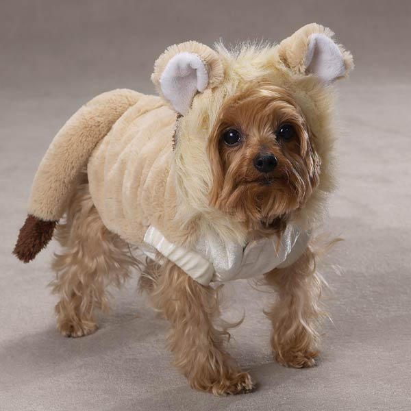 Lil' Lion Costume for Dogs by Casual Canine