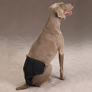 Male Pup Pants
