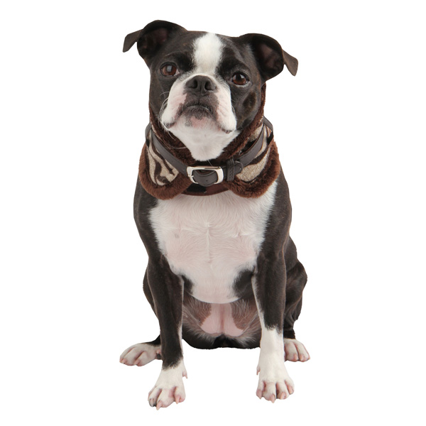 Modern Zebra Neckguard Dog Collar by Puppia - Brown