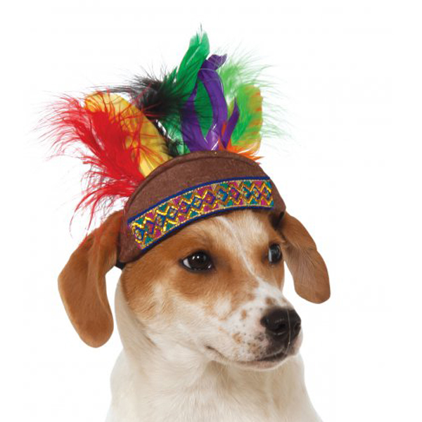 How To Get Your Dog To Wear A Hat