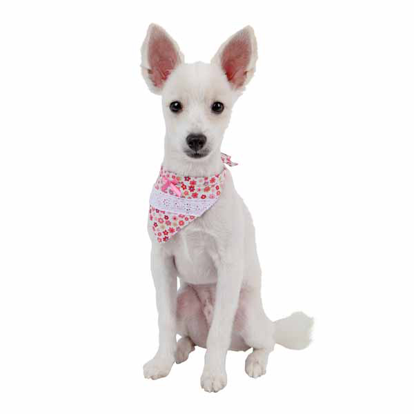 Patches Dog Scarf - Pink