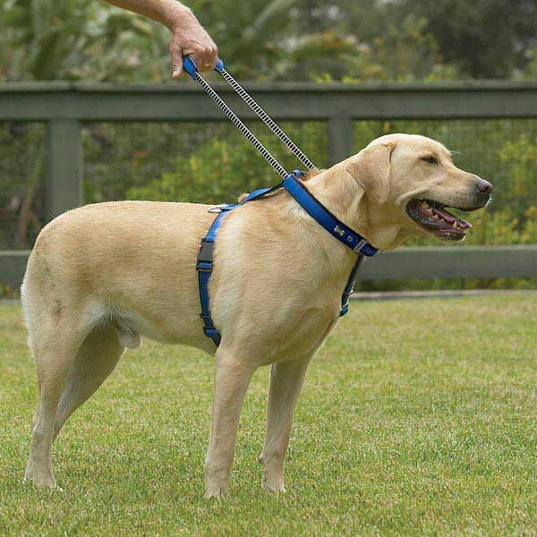 Patento Pet Dog Harnesses and Leash - Red