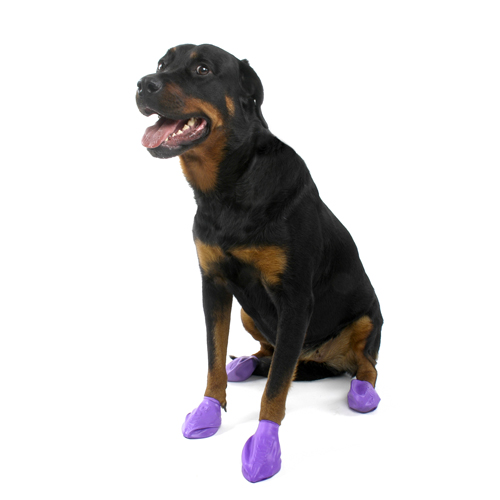 PawZ Disposable Dog Booties 12pk - Large Purple