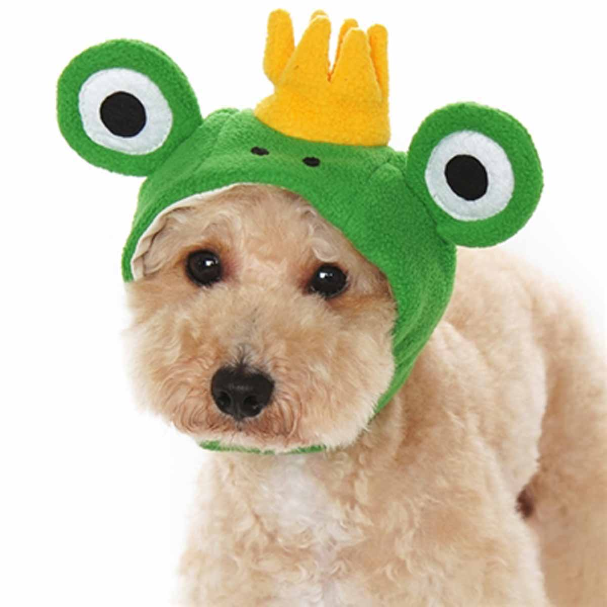 Prince Frog Dog Hat by Dogo with Same Day Shipping | BaxterBoo