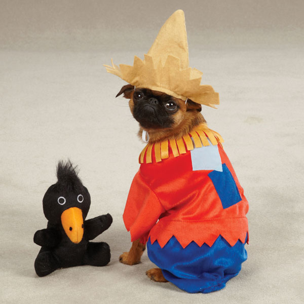 Scarecrow Dog Halloween Costume by Zack and Zoey