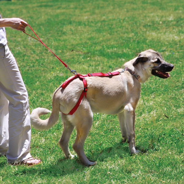 Silver Tails Bottoms Up Senior Dog Harness