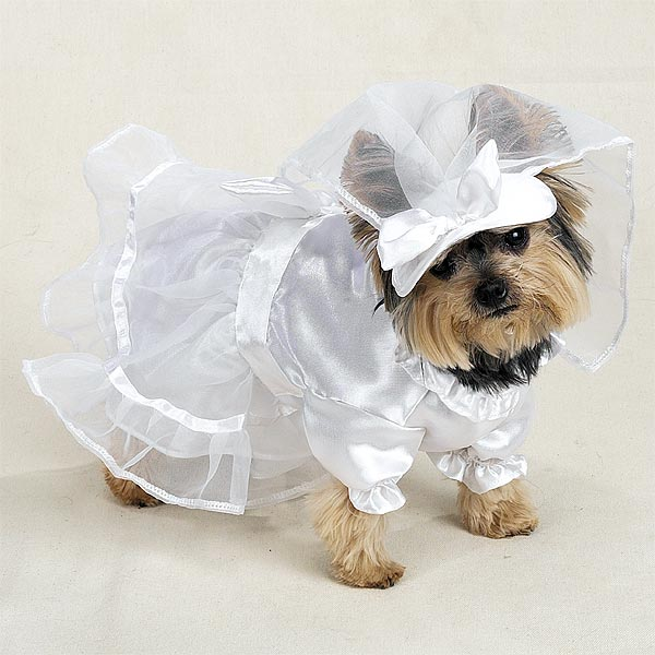 Wedding Dress with Veil Dog Halloween Costume by Casual Canine ...