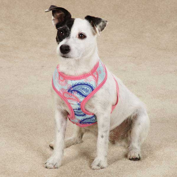 Fresh Water Paisley Dog Harness