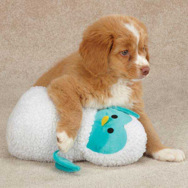 Zanies Snuggly Owlets Dog Toy - Blue