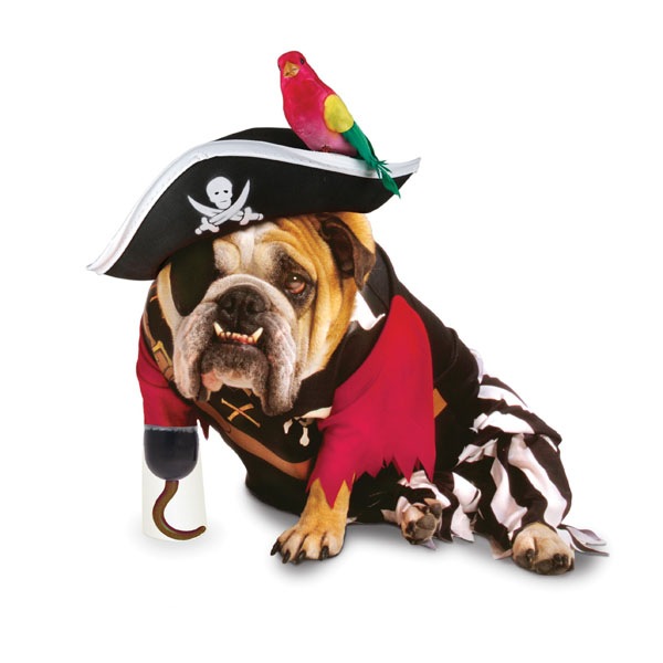Zelda Pirate Halloween Dog Costume