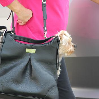 Dog Carriers products