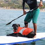 View Image 2 of Canine Dog Lifejacket - Orange
