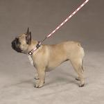 View Image 2 of Adopt Dog Leash