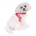 View Image 2 of Alyssa Dog Harness - Red