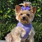 View Image 1 of American River Ultra Choke-Free Mesh Dog Harness - Purple