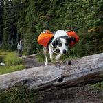 View Image 2 of Approach Dog Pack by RuffWear - Campfire Orange